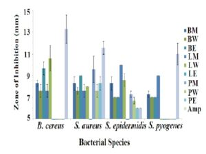 Antibacterial activity of T. lanceolata berry, leaf and peppercorn extracts measured as zones of inhibition (mm) against Gram-positive bacteria.