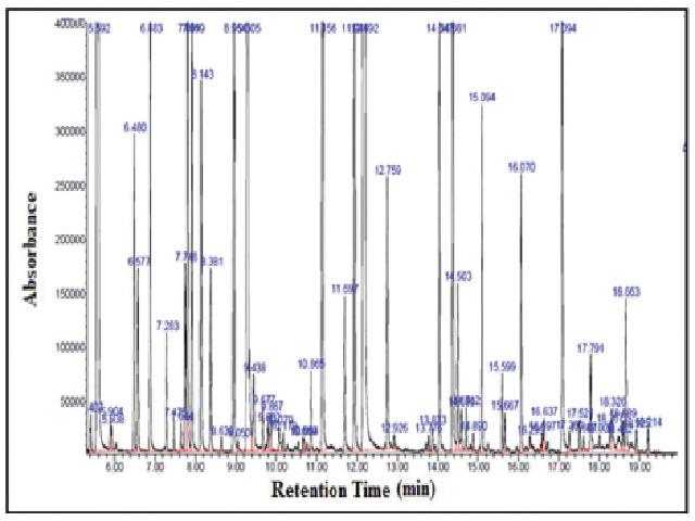Chromatogram of M. aquatica essential oil obtained by GC