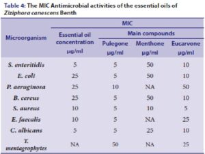 The MIC Antimicrobial activities of the essential oils of Ziziphora canescens Benth
