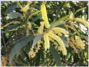 Medicinal Plant Images