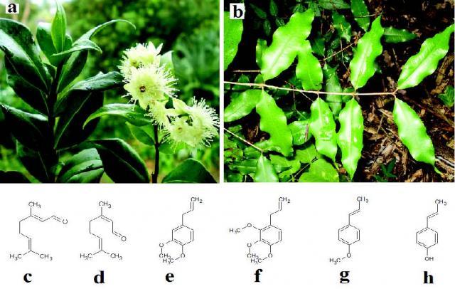 (d) geranial (β-citral), (e) methyl eugenol, (e) elemicin, (g) anethole and (h) chavicol.