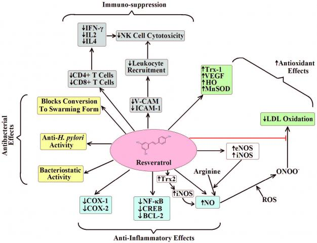Known affects of resveratrol. Reproduced from2 with author and publishers permission.